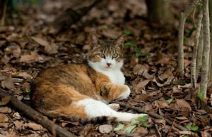 the ASPCA, approximately 5 to 7 million companion animals enter animal ...