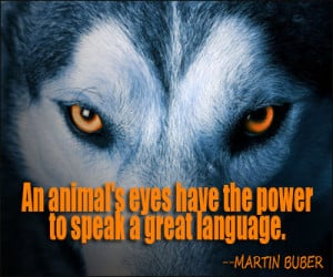 ... Eyes Have The Power To Speak A Great Language - Animal Quote