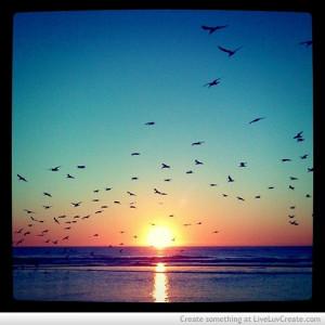 cute, fashion, lake and birds, love, pretty, quote, quotes