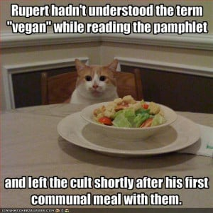 Funny Cat Pictures With Captions