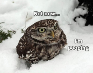 Funny Owl | In Photos