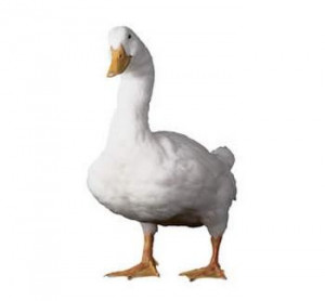 ... manager replaces actor Gilbert Gottfried as voice of the Aflac duck