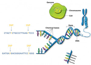 personalized-medicine-dna-genes-snps