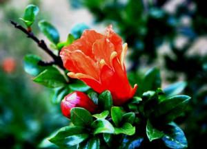 Flower Bud Orange Leaves