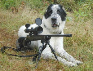 Funny Dog With Gun