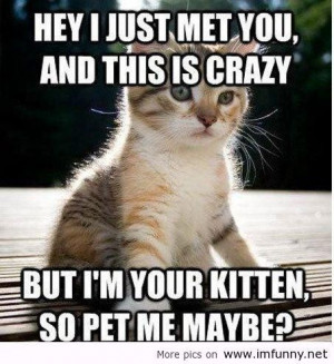 Cute picture captions quotes little funny kitten call me