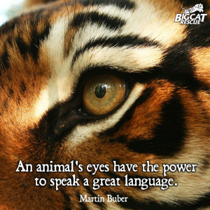 So true, we LIKE this quote… :) #tiger #eye #animal #welfare