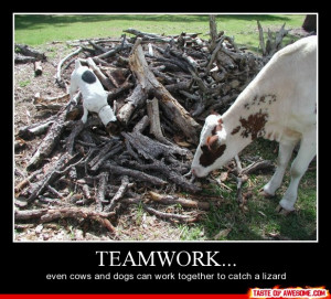 ... Teamwork, Even Cows And Dogs Can Work Together To Catch A Lizard