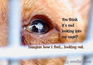 Sad Animal Quotes Filed under animal quotes