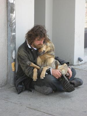 bond, dog, friends, man and dog