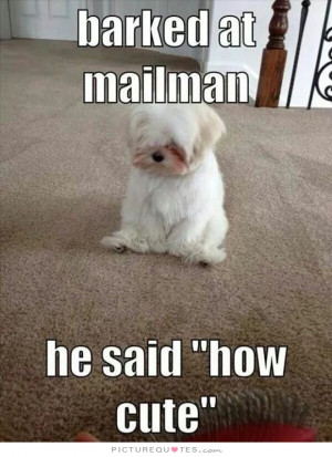 Cute Quotes Dog Quotes Funny Dog Quotes