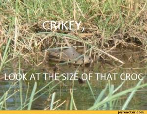 funny pictures,auto,shoe,photo,croc