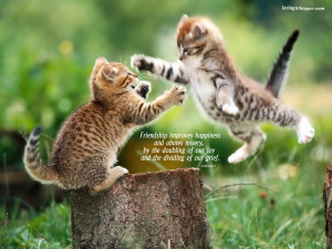 To download click on Cute Kittens Friendship Day Quotes Images then ...