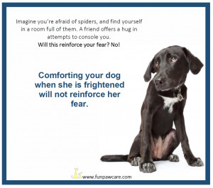 Methods to Manage Your Dog's Fear