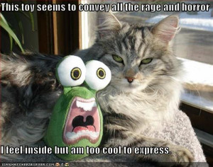 Crazy Funny Pictures