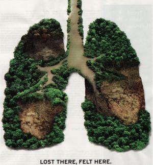 Rainforest-destruction-effects-1