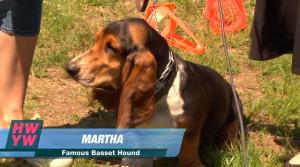 28-martha-basset-hound.jpg
