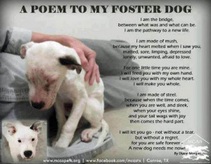 Why become a Foster Home?