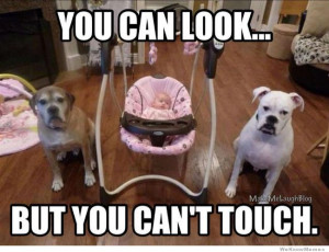 Baby Guard Dogs – You can look but you can't touch.