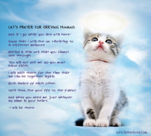 Cat's prayer for grieving humans