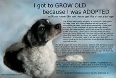 Old Dog Quotes