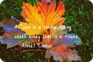 Funny Autumn Quotes