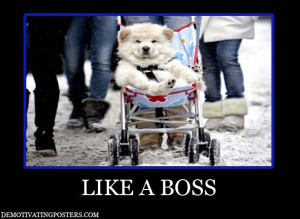 ... , funny posters, posters, like a boss, dog, stroller, baby carriage