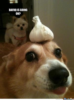 Surprised Dog Meme Garlic dog. added 7 months ago
