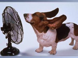 Hot Dog Feeling Cool Breeze