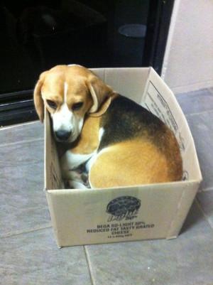Funny Beagle Pics Photo