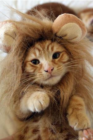 Funny Lion Cat Mane Kitten