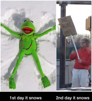 funny-winter-kermit-no-snow