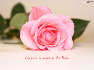 Pink Flower Wallpaper Of Love Quote