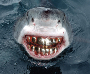 ... With Teeth Grill, Great White Shark Smile, Funny smile, bad teeth