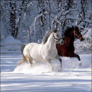 Incredible Photo of Horses in Snow