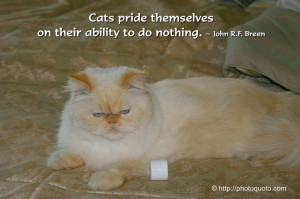 Cats quotes