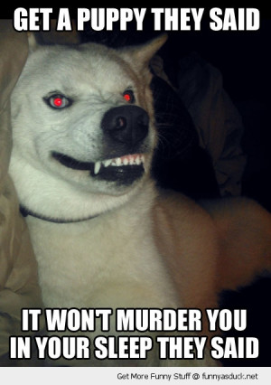 evil crazy dog animal kill funny pics pictures pic picture image photo ...