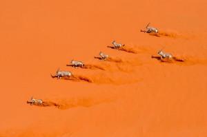 ... sand dunes of Sossusvlei, Namibia) by Marsel van Oosten Photographer