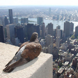 bird's-eye view is an elevated view of an object from above, with a ...