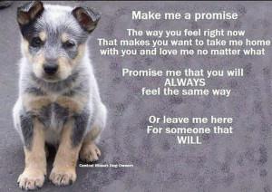 Home » » Pet Adoption Agency