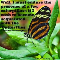 Butterflies quote via www.Facebook.com/InspiringQuotesWithPennyLee