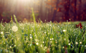 Download Wet grass in the morning light wallpaper
