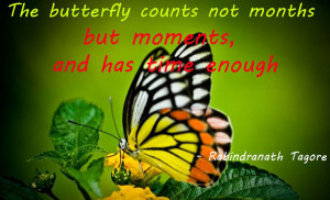 beautiful-butterfly-quotes-images-5-0a48feb5.jpg