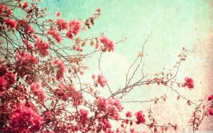Flowers flowers-tumblr