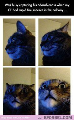 Cat Reaction Sneezing Meme