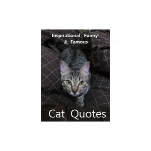 amusing quotes cat quotes cats cats funny funny quotes about cats ...