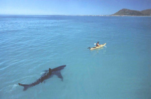 Go kayaking they said. It'll be fun they said