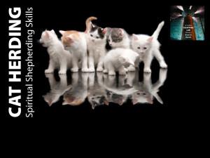 cat-herders.jpg