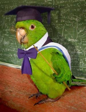 funny parrot jokes
