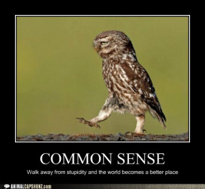 funny-animal-captions-owls-really-are-quite-wise